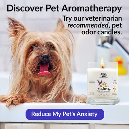 Discover Pet Aromatherapy